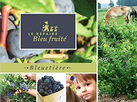 Bleuetière Le Repaire bleu fruité à Saint-Vallier