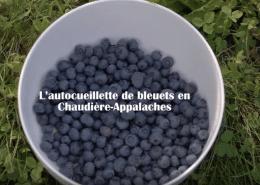 autocueillette-bleuets-chaudiere-appalaches